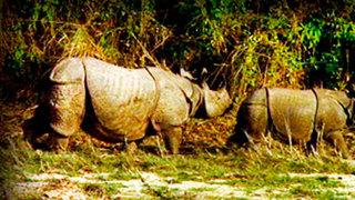 Indian Rhinoceros. On The Tracks Of The Unicorn