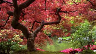 Yoga para el deporte: Yoga para Core y Hombro
