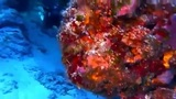 Arrecifes alucinantes
