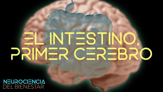 El intestino: nuestro primer cerebro