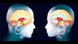 Empatía en el cerebro